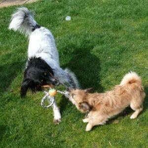 Pet positive - Puppy Training